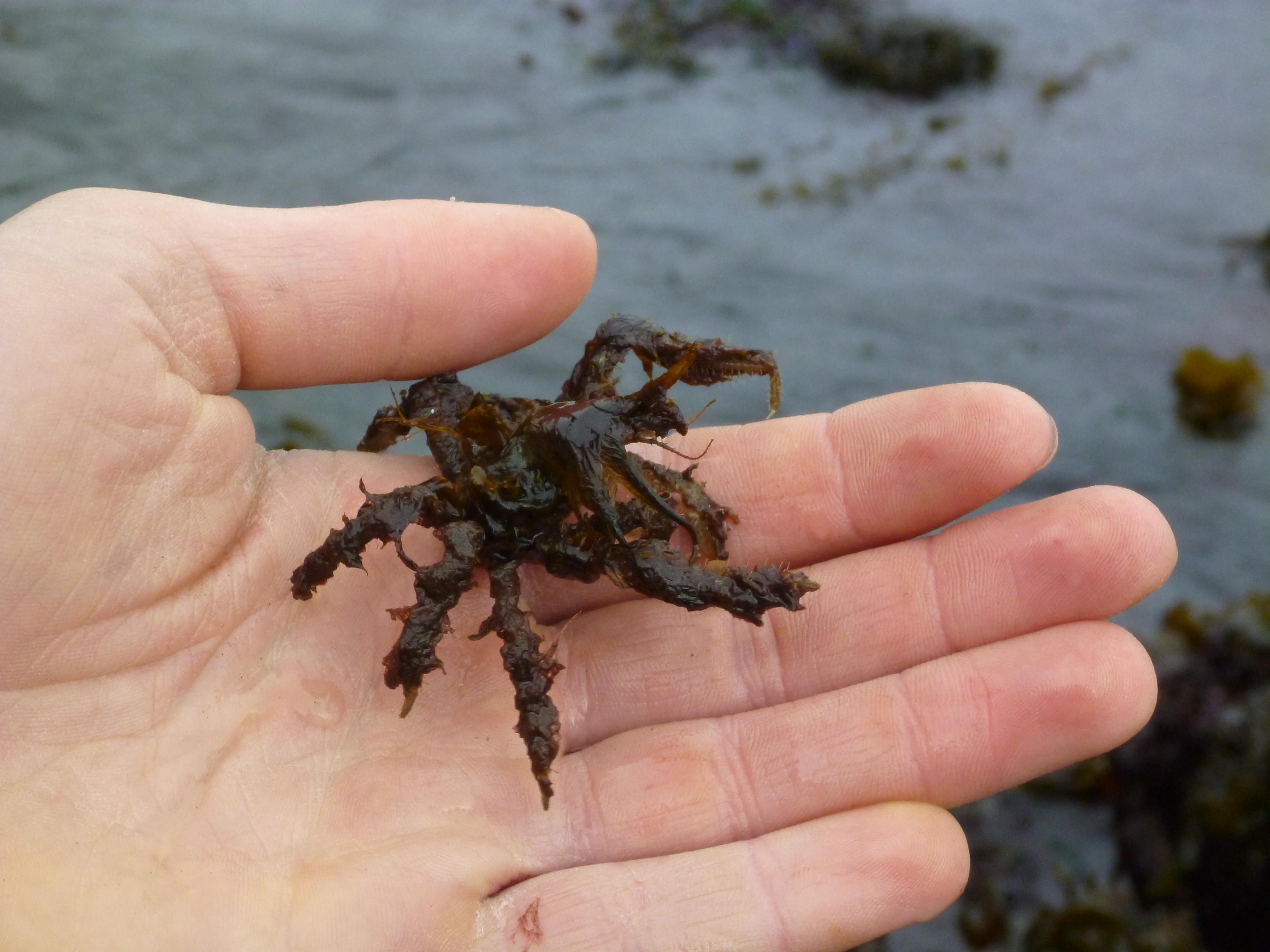 decorator crab2 - Photo Decorator