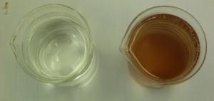 Tap water & Mesodinium