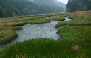 Estuary 3