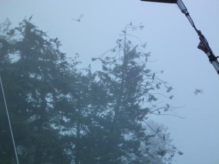 DCCOs in tree