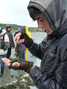 Ivan & seaweed