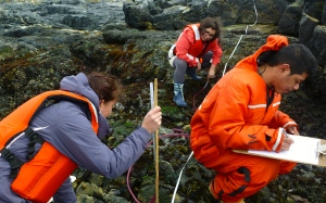 Using ancient but precise, Egyptian technology, the students carefully measure vertical height using a water level and record the abundance of different species as they work their way up the shore.