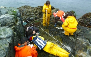Getting up close and personal with limpets and periwinkles is the best way to make observations.