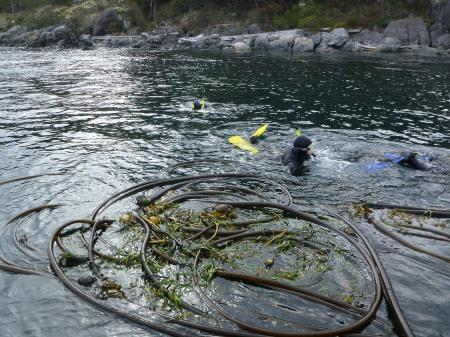E snorkellers2