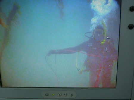 Stuart underwater