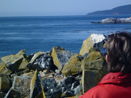 Kate watching humpback