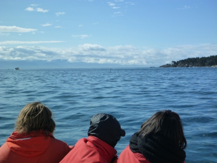 Orcas followed us to the mouth of Pedder Bay