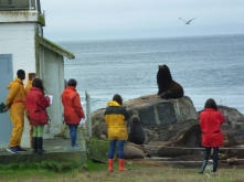 Observing a California sea lion