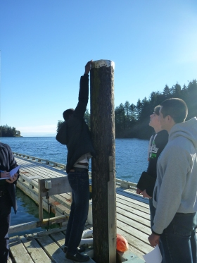 Tomma touching the top of the piling