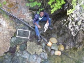 Tomma sampling intertidal biodiversity