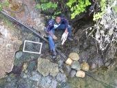 Tomma sampling intertidal biodiversity